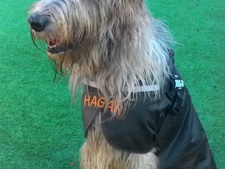 Hagar wearing harness 29/10/2019